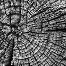 Weathered Log Abstract by Joe Elliott