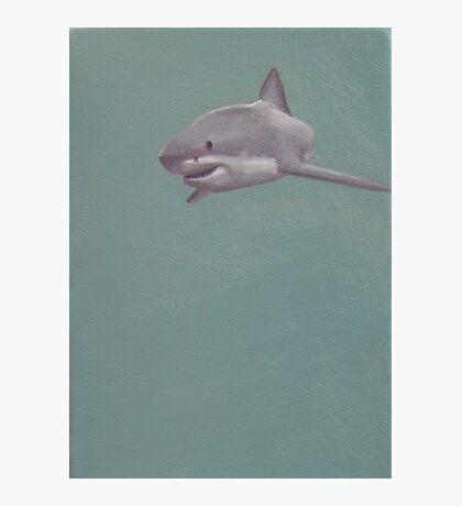 Great White Photographic Print