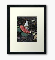 Phallic Fungi Framed Print