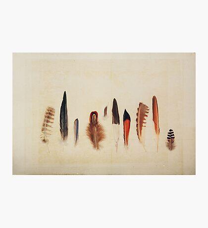 Feather Study no. 1 Photographic Print