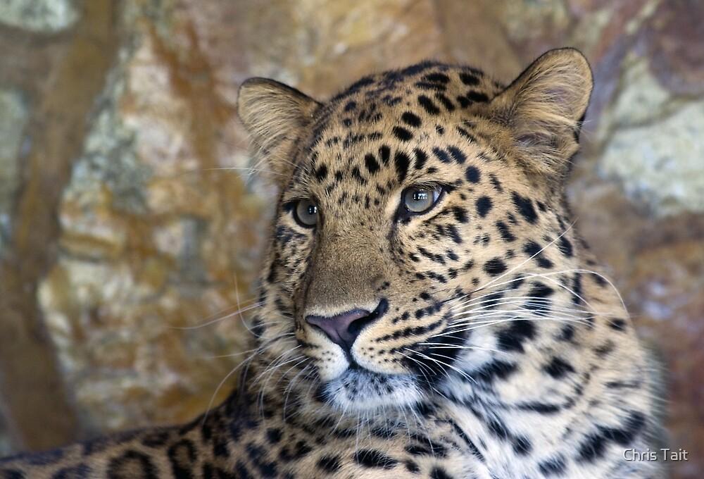leopard  by Chris Tait