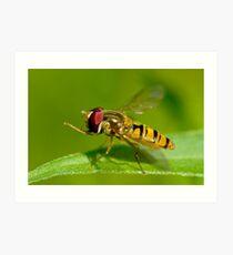 Hoverfly Art Print