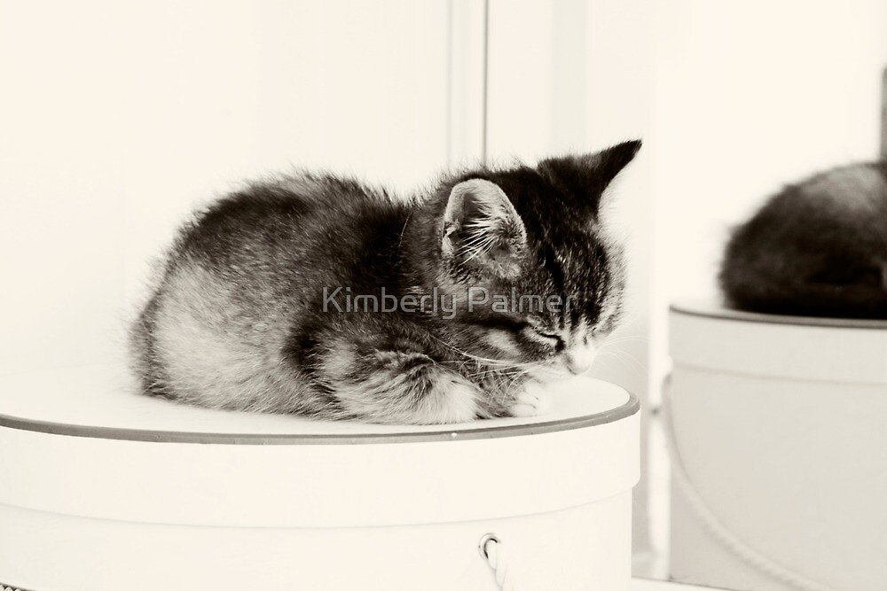 Cat on the Hat Box by Kimberly Palmer