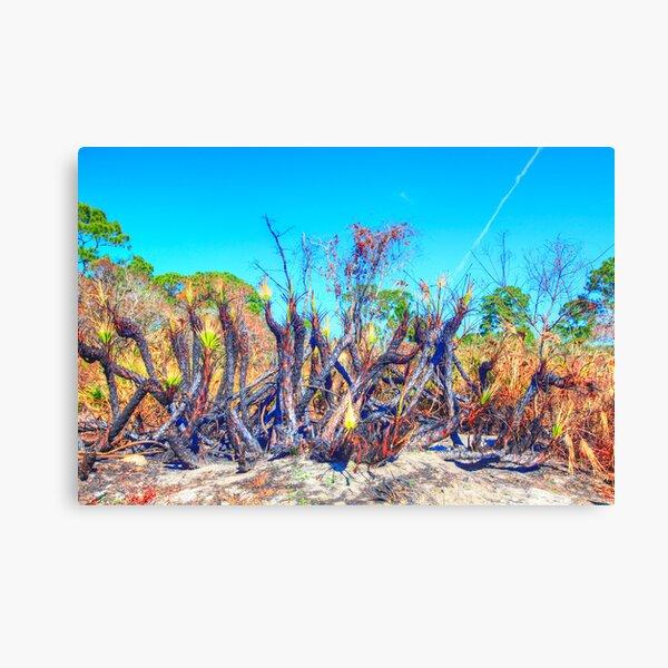 Meteor Fire Canvas Print