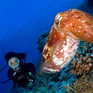 Cuttlefish by underwaterart