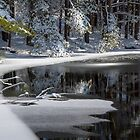 Winter Fresh by Karol Livote
