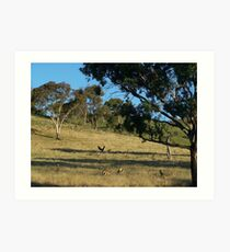 Just before dusk, south of Cook in Canberra.- Australia. Art Print