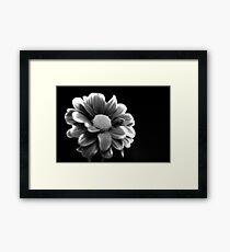 Black and white Chrysanthemum Framed Print