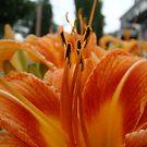 Orange by Kidono-chan