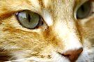 Macro Cat! by Ell-on-Wheels