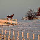 Cold Morning in Kentucky by John Carey