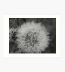 Dandelion wishes - black and white Art Print