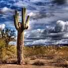 One Tall Cactus by gemlenz