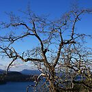 Treetop View by TerrillWelch