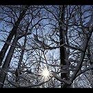 """Waveny Woods 3 by Christine """"Xine"""" Segalas"""