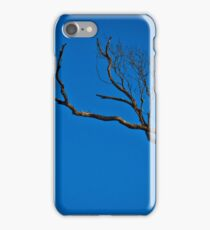 Brown Falcon at Roost iPhone Case/Skin