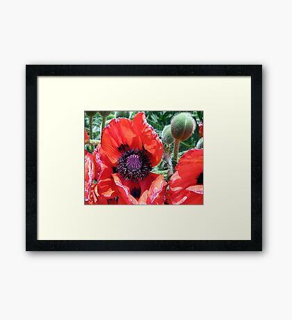 Heart Of A Poppy Framed Print