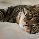 Brown Tabby Art by WiseKitty