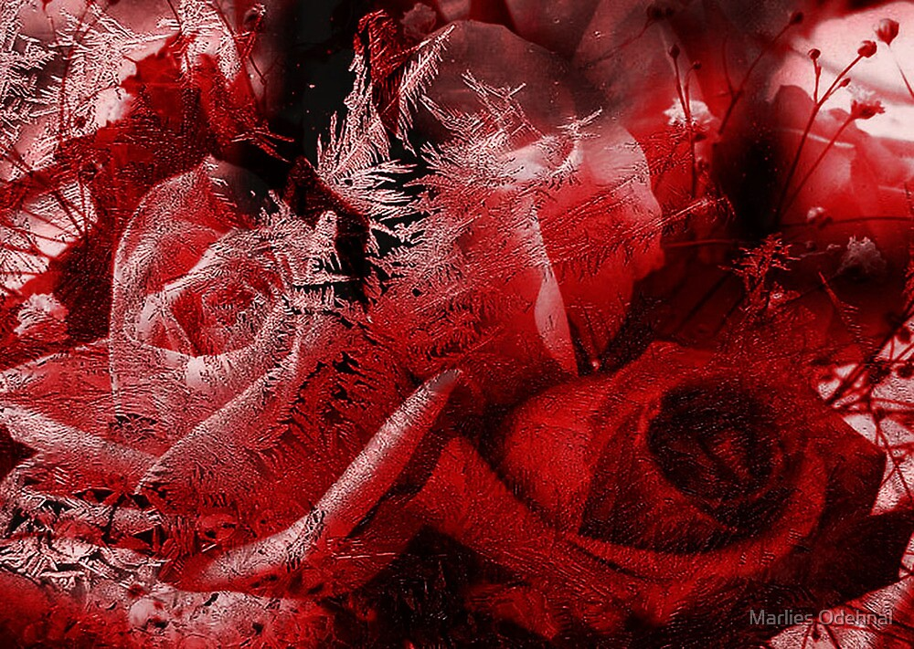Frozen Roses by Marlies Odehnal