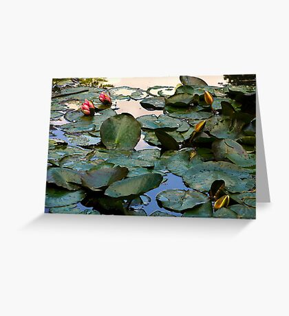 Water Lilies, Giverny, France 2008 Greeting Card