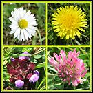 Wildflowers Collage von BlueMoonRose