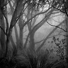 Gruselige Bäume - Morialta von Ben Loveday