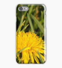 Dandelions iPhone Case/Skin