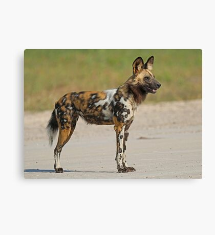 Painted Dog! Canvas Print