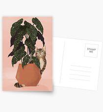 tiger at heart Postcards