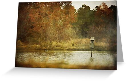 Country Pond by Jonicool