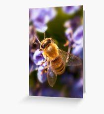 Bee. Greeting Card