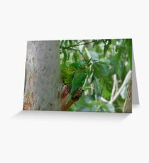 Scaly Breasted Lorikeets Greeting Card