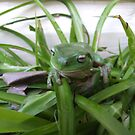 frog in pot plant by aggieeck