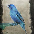 Mountain Bluebird by Pat Moore