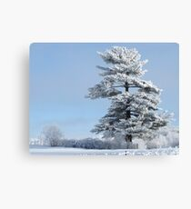 One Frosted Tree Canvas Print