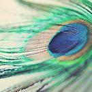 Peacock feather II by Sara Hazeldine