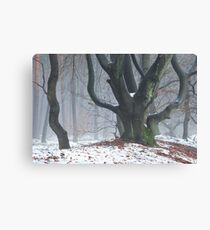 Fancy trees Canvas Print