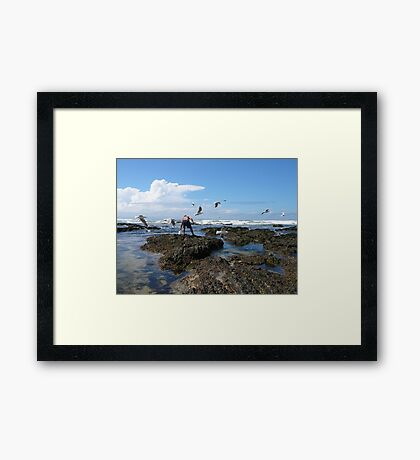 Collecting Cunjevoi, Corindi Beach, NSW Framed Print