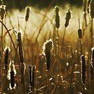 Winter Reeds by KatsEyePhoto