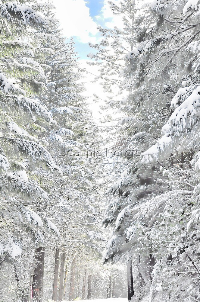 winter wonderland by Jeannie Peters