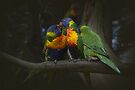 Rainbow Lorikeets by Elaine Teague