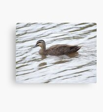 Fishing For A Duck Canvas Print