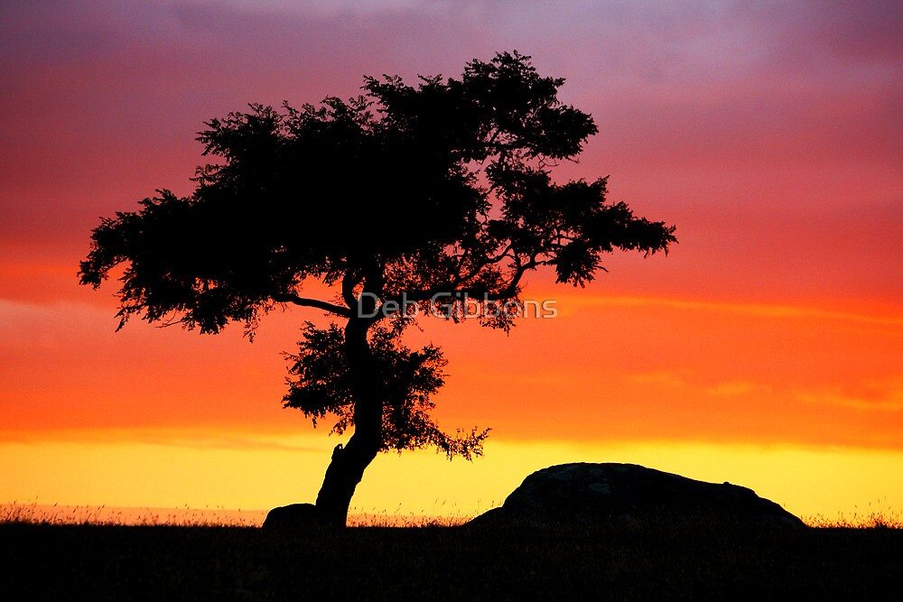 The Tree at Dog Rocks Geelong Victoria by Deb Gibbons