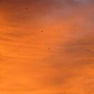 Birds in a Burning Sky by elsha