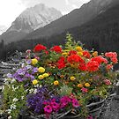 Flowers color the world by Arie Koene