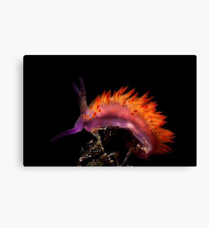 Flaming Tongue Canvas Print