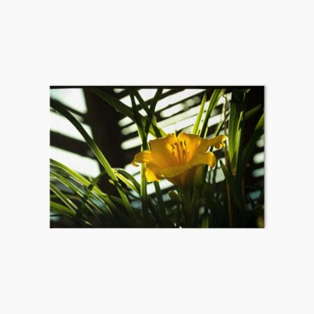 Daffodil in the Dark Art Board Print