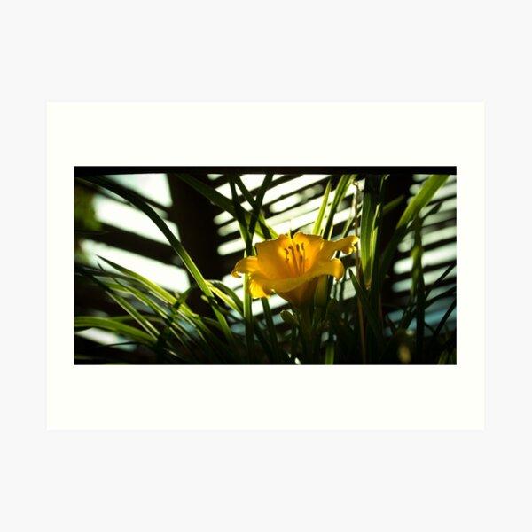 Daffodil in the Dark Art Print