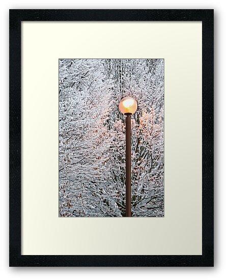 Golden winter glow by George Parapadakis (monocotylidono)