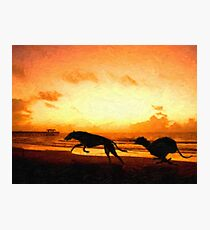 Greyhounds on Beach at Sunset Photographic Print